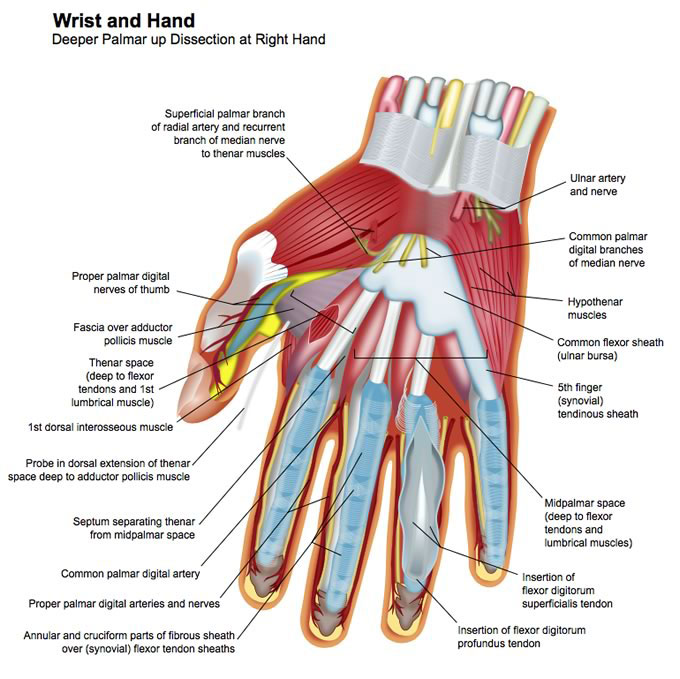 Hand and Upper Extremity